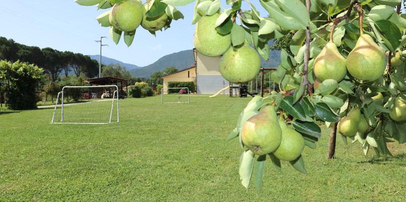Agriturismo la country house in collina montella avellino - Agriturismo in campania con piscina ...